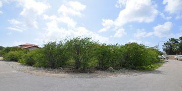 Sabal Palm lot 48