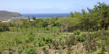 Statia Mountain Piece C-3